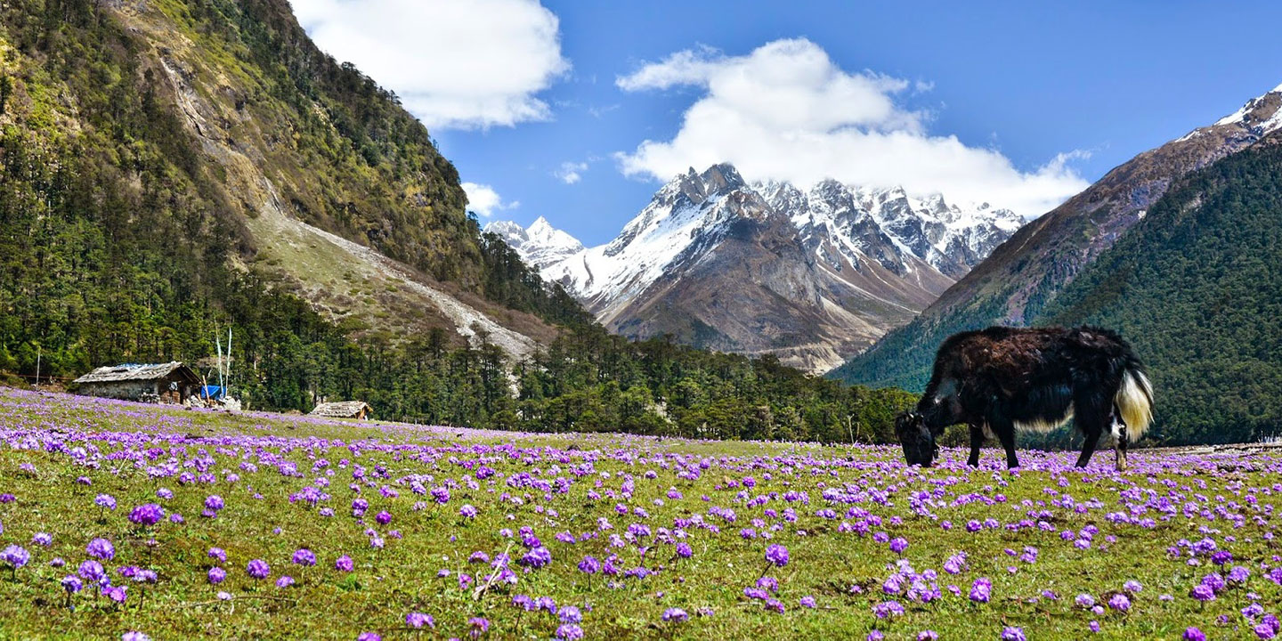 Flower Valleys & Kanchendzonga Views
